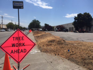 median trees removed in a commercial parking lot.